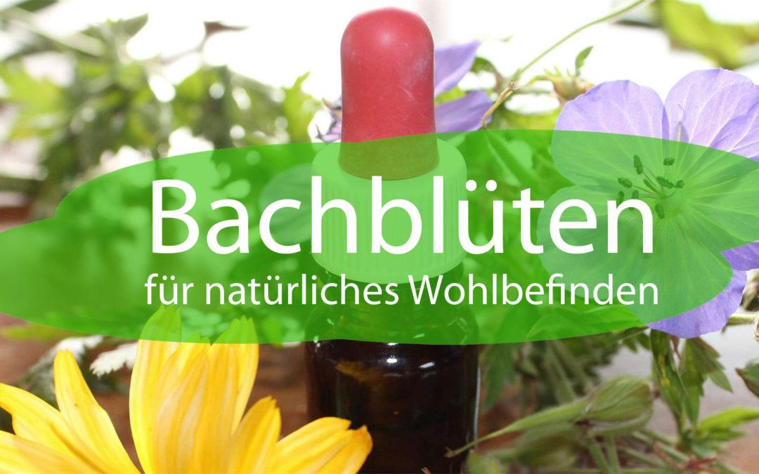 Bachblüten für natürliches Wohlbefinden